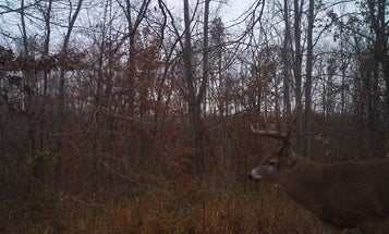 How Last Year's Trail Camera Photos Can Help You Kill a Buck This Year