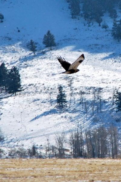 httpswww.outdoorlife.comsitesoutdoorlife.comfilesimport2014importImage2010photo1001321579slide9_13.jpg