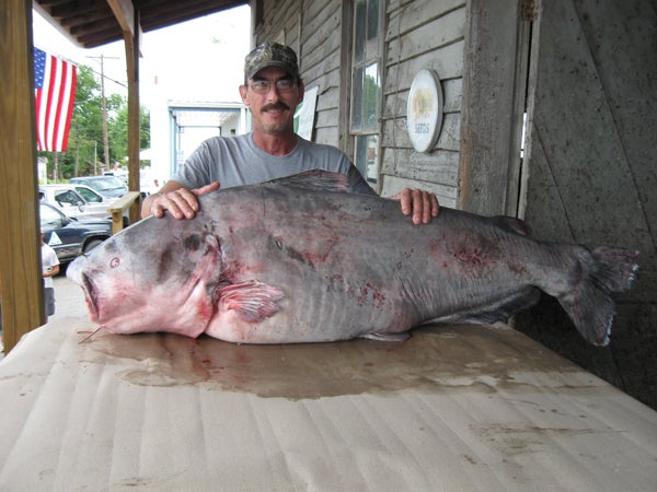 httpswww.outdoorlife.comsitesoutdoorlife.comfilesimport2014importImage2010photo10013215793_blue_catfish_-_36155.jpg