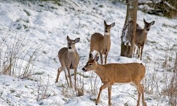 Understanding Wildlife Biology: Population Dynamics 101