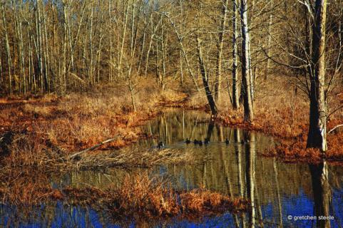 httpswww.outdoorlife.comsitesoutdoorlife.comfilesimport2014importImage2009photo7Decfoliage_64.jpg