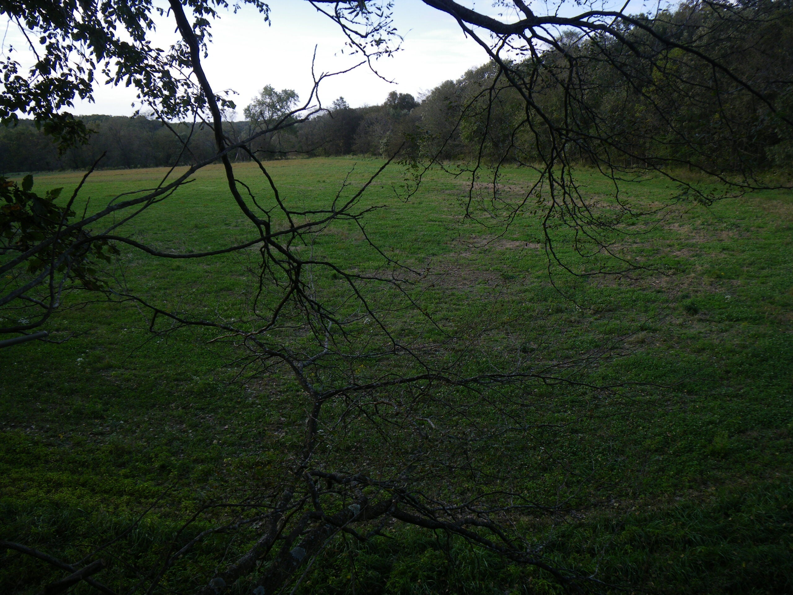View From a Deerstand