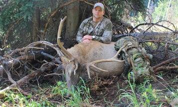 Live Hunt: Two Elk Down In Colorado Bowhunt