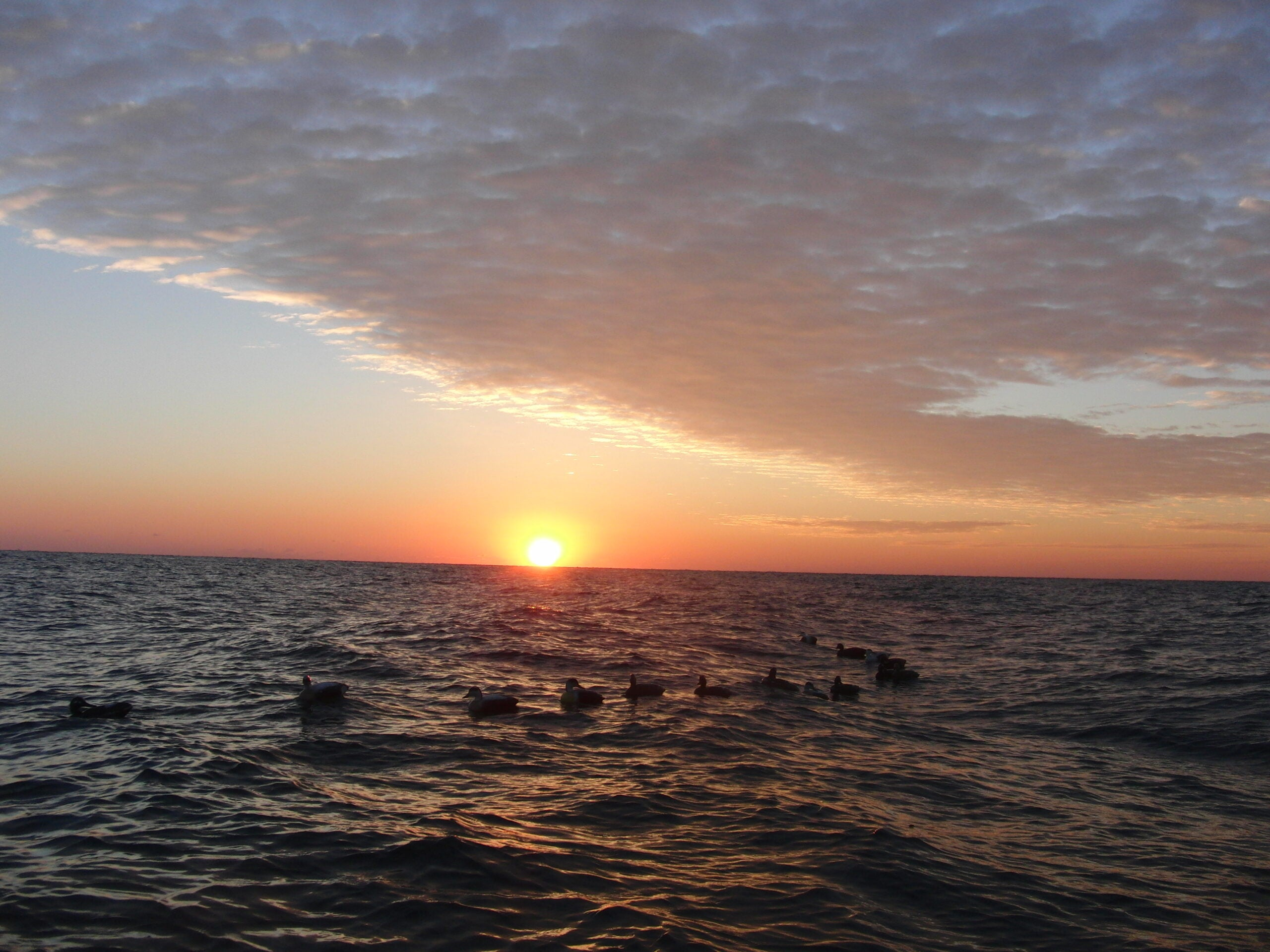 Rhode Island Sea Ducks: Pt. 2