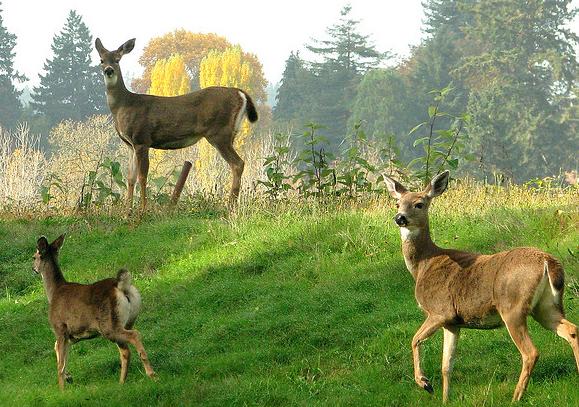 httpswww.outdoorlife.comsitesoutdoorlife.comfilesimport2013images20111115_4.png