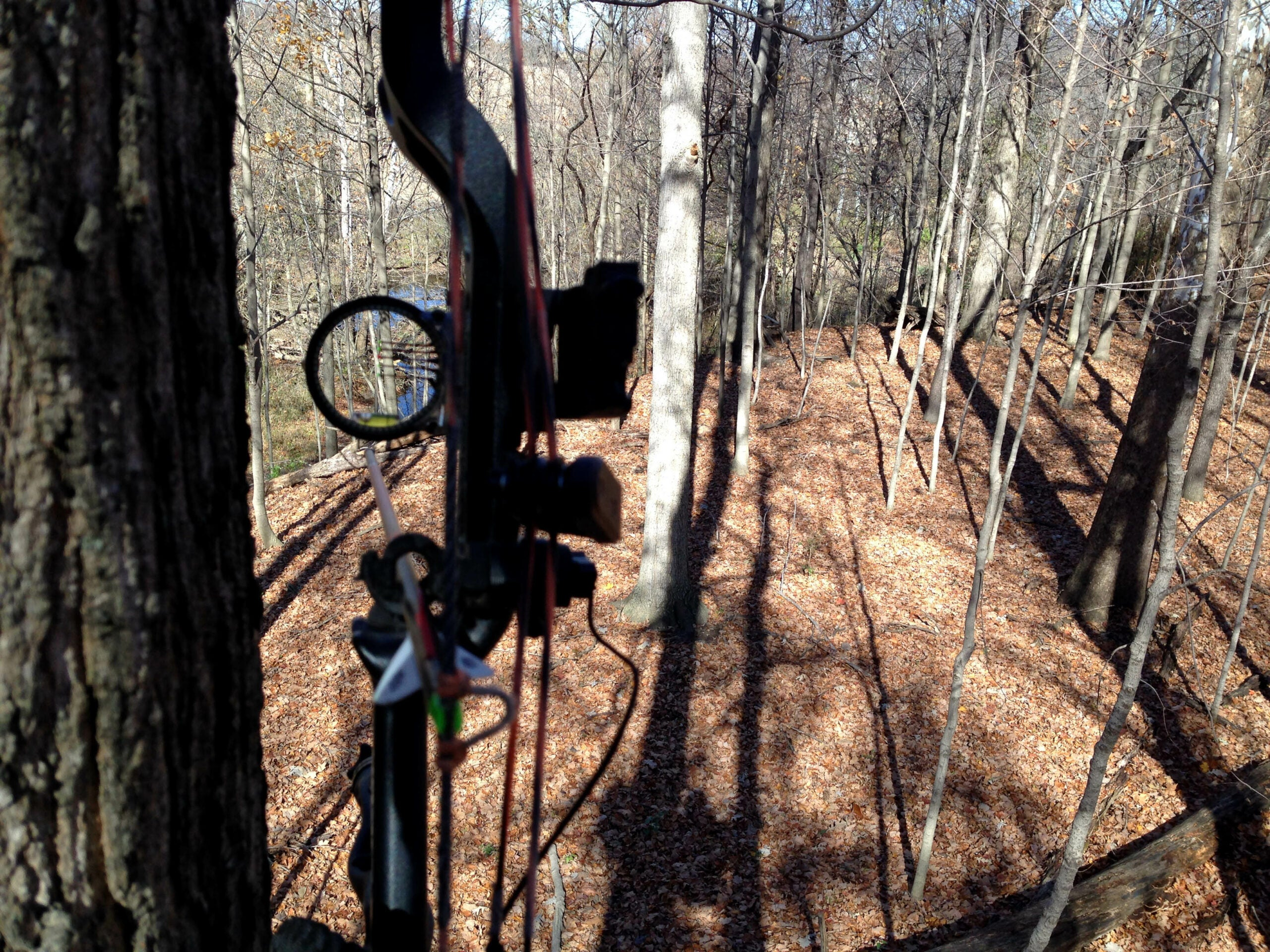 Whitetail Deer: 3 Changes to Make for the Fall Season