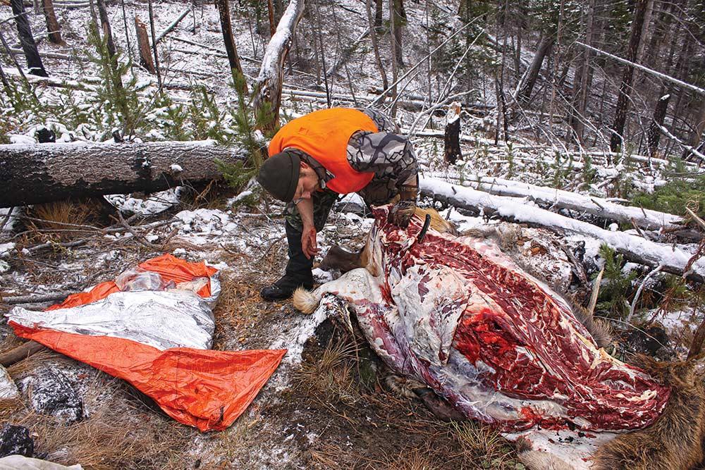 Hunter butchers elk Montana