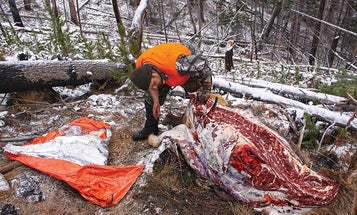 5 Rules for Packing Out Elk Meat