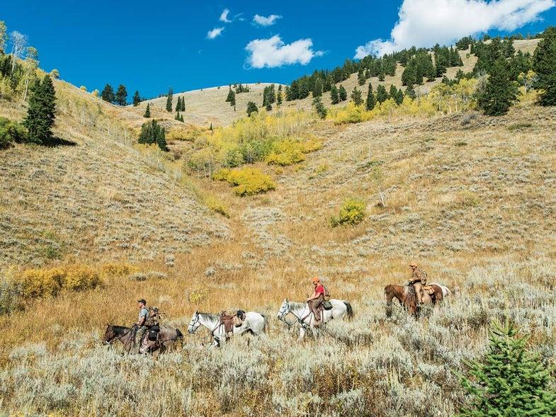 mule deer hunting greyback ridge