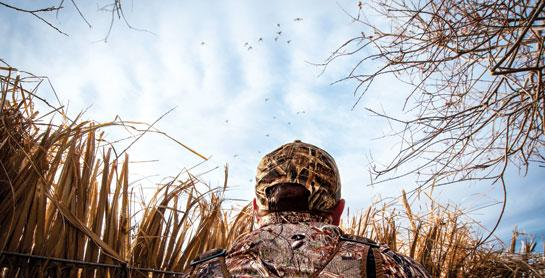 How Ducks See: The Science Behind Waterfowl Eyesight