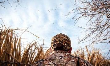How Ducks See: The Science Behind Waterfowl Eyesight