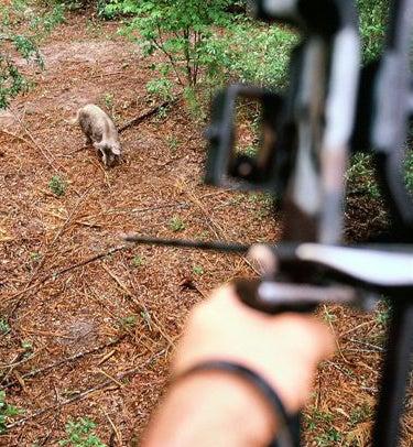 httpswww.outdoorlife.comsitesoutdoorlife.comfilesimport2014importImage2008legacyoutdoorlifehog_target_practice.jpg