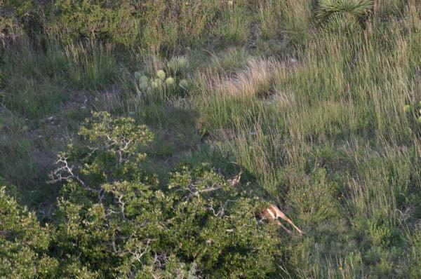 httpswww.outdoorlife.comsitesoutdoorlife.comfilesimport2013images201002FordRanch_038_0.jpg