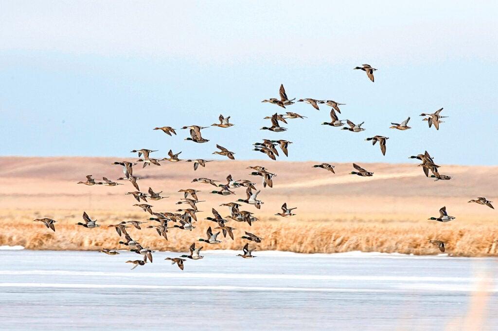 hit more ducks