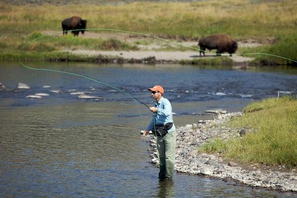 Yellowstone Cutthroats
