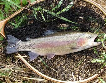 httpswww.outdoorlife.comsitesoutdoorlife.comfilesimport2014importImage2007legacy29TroutRainbow.jpg