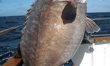 Story Behind Monster New Zealand Sea Bass