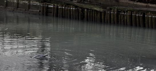 Dolphin Trapped in Brooklyn's Gowanus Canal, One of America's Most Polluted Waters
