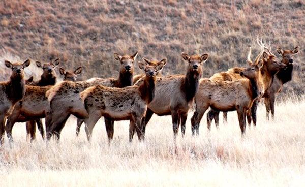 httpswww.outdoorlife.comsitesoutdoorlife.comfilesimport2013images20100832_nationalparkservice_5_0.jpg