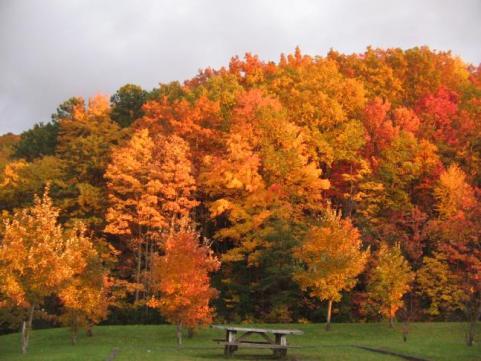 httpswww.outdoorlife.comsitesoutdoorlife.comfilesimport2014importImage2009photo7Decfoliage_35.jpeg