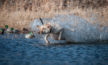 19 Gun Dog Terms You Should Know When Training a Hunting Dog