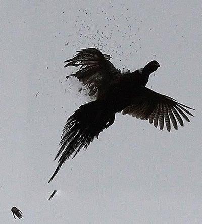 httpswww.outdoorlife.comsitesoutdoorlife.comfilesimport2014importImage2008legacyoutdoorlifetower_shots_6.jpg