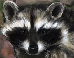 The Purse-Snatching Racoon