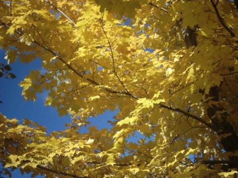 httpswww.outdoorlife.comsitesoutdoorlife.comfilesimport2014importImage2009photo7Decfoliage_38.jpeg