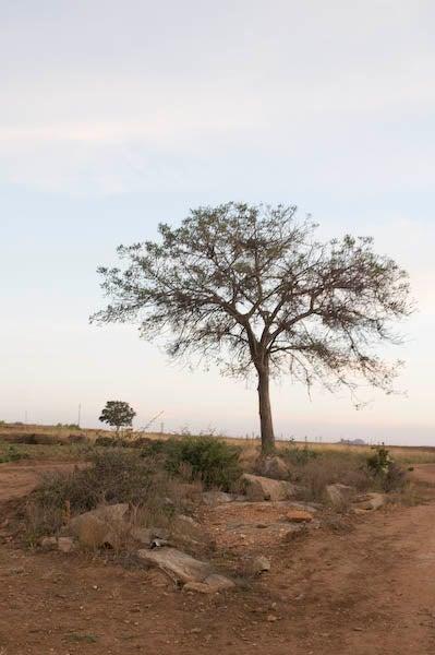 Africa_29
