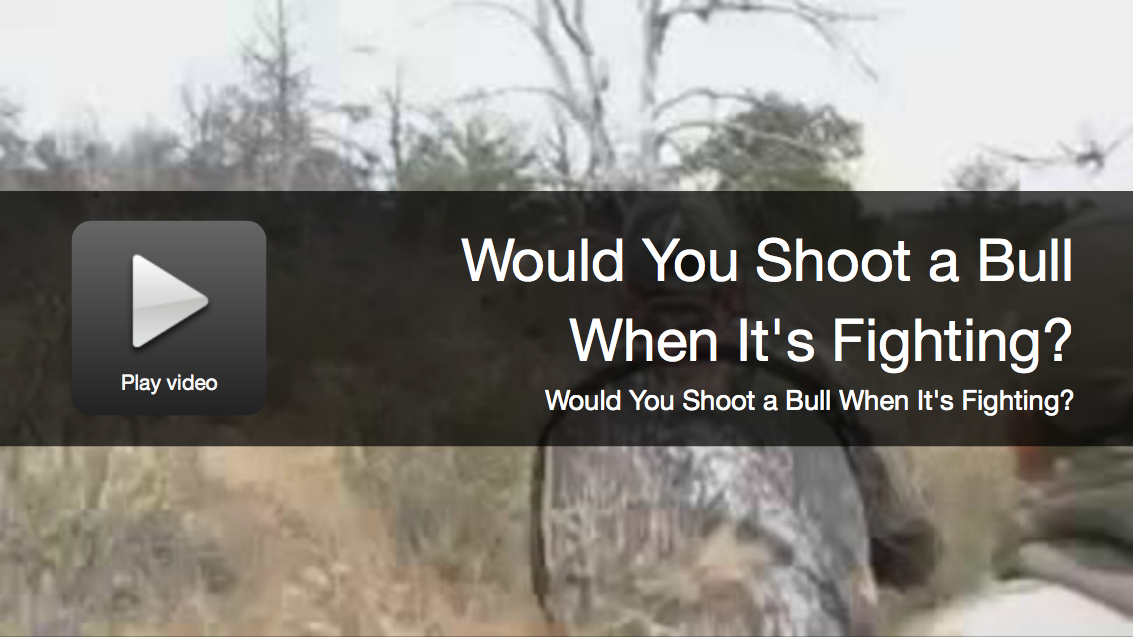 Would You Shoot a Bull When It's Fighting?