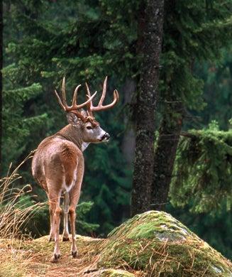 Deer Hunting: America's 6 Toughest Whitetail Bucks