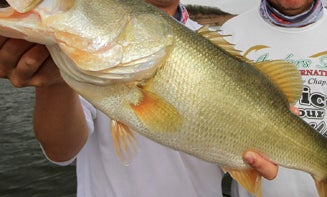 Why Lake El Salto is Still the Best Place to Catch Your Biggest Bass Ever