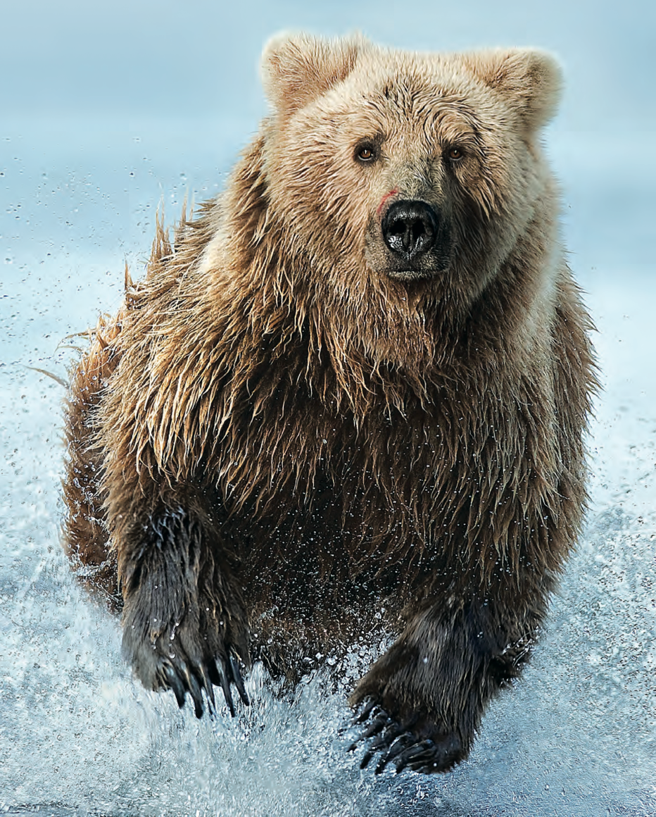 Tips and Tactics: How to Hunt Brown Bears