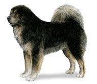 China's $600,000 Dog