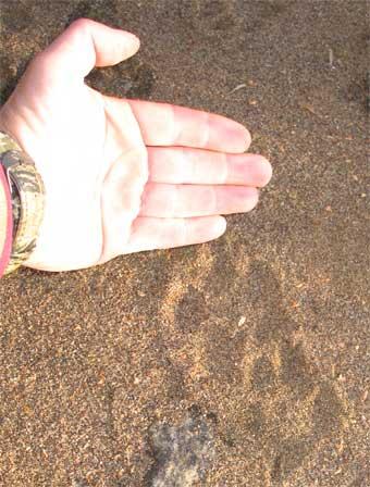 httpswww.outdoorlife.comsitesoutdoorlife.comfilesimport2014importImage2007legacyoutdoorimageswolfstory15_448.jpg