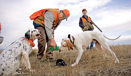 Hunting Dogs: 3 Warning Signs of Heat Stress