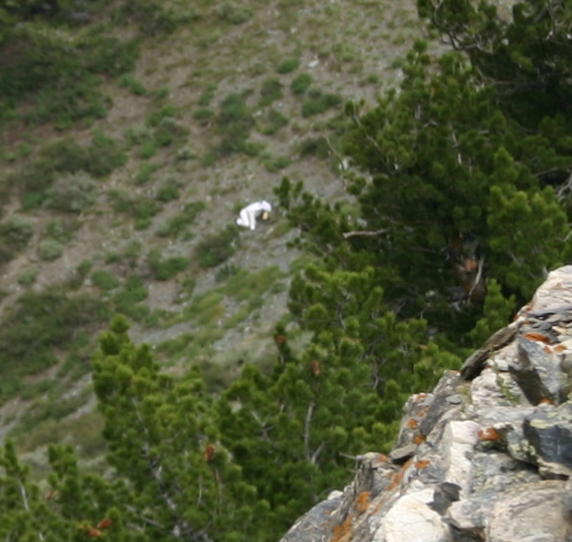 'Goatman' Dressed in Homemade Goat Suit on the Loose in Utah