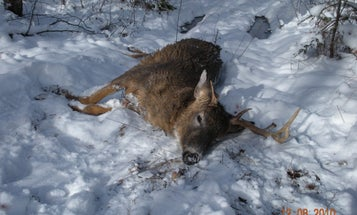 Great Hunt For A Buck