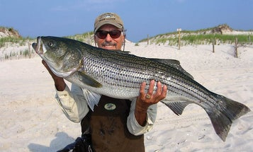 Are You Good Enough to Catch Striped Bass from the Surf?