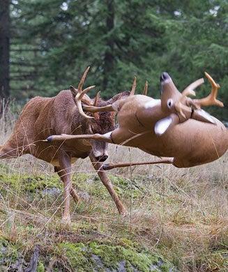 Deer Hunting: Ultra Aggressive Tactics for the Rut