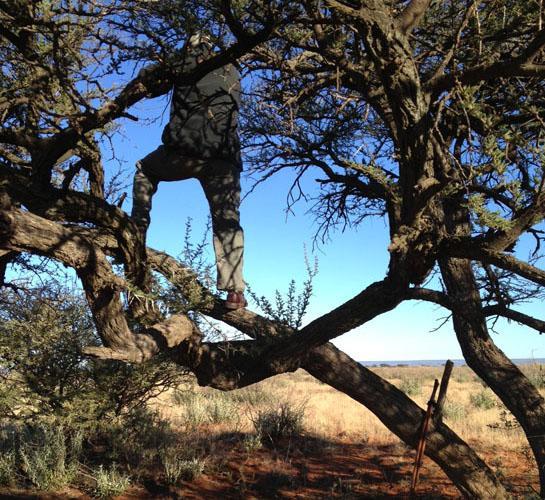 httpswww.outdoorlife.comsitesoutdoorlife.comfilesimport2014importBlogPostembedPatchesInTree.jpg