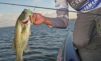 Bass Fishing: Take Advantage of Extreme Tides