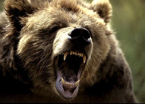 httpswww.outdoorlife.comsitesoutdoorlife.comfilesimport2014importImage2011photo1001321579siberian_brown_bear_teeth-1545.jpg