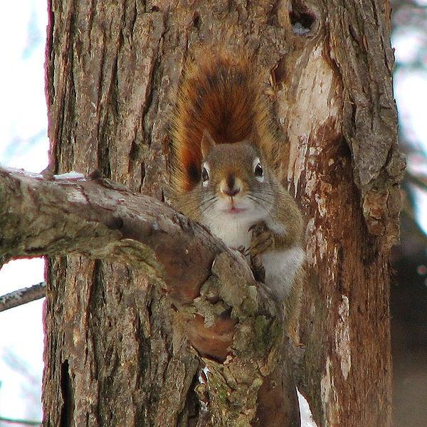 httpswww.outdoorlife.comsitesoutdoorlife.comfilesimport2013images2010104_23.jpg