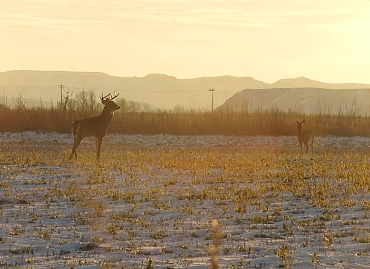 Whitetail Deer: The Rut Is Still Cranking