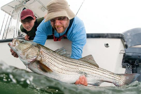 Striped Bass Experts Reveal Their Favorite October Tactics