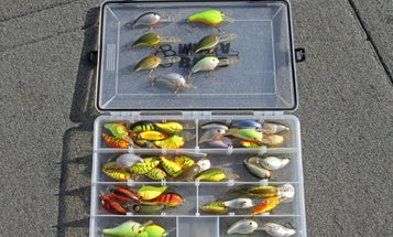 Fishing Tips: How To Gauge Crankbait Color Selection