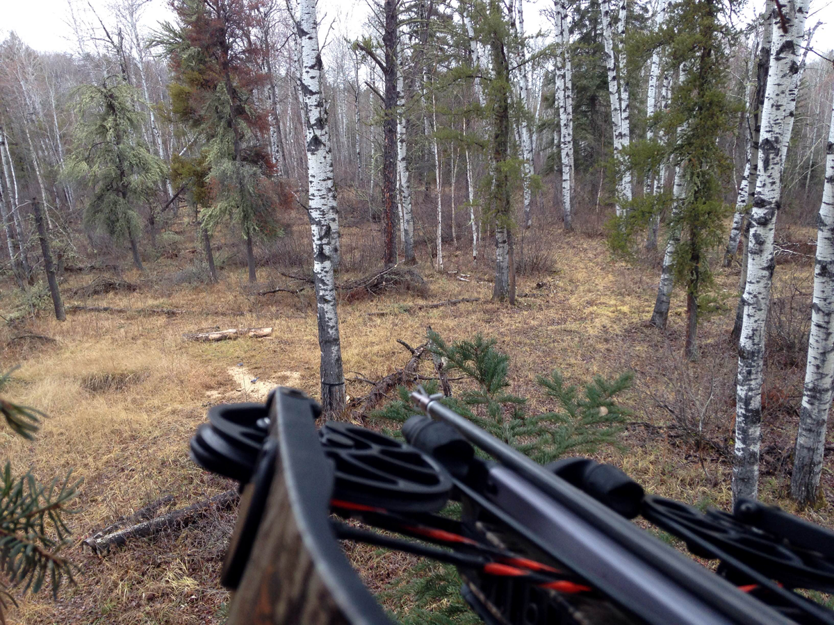 3 Rules from Hunting Saskatchewan that Contradict Conventional Deer Knowledge