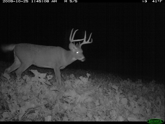 Whitetail Deer: First Signs of Significant Rut Behavior