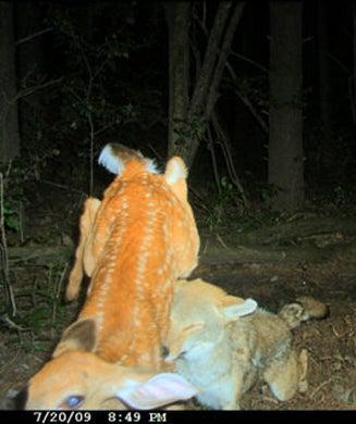 Craziest Whitetail Deer Photos